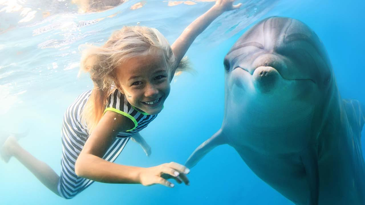 Dolphin and swimming girl