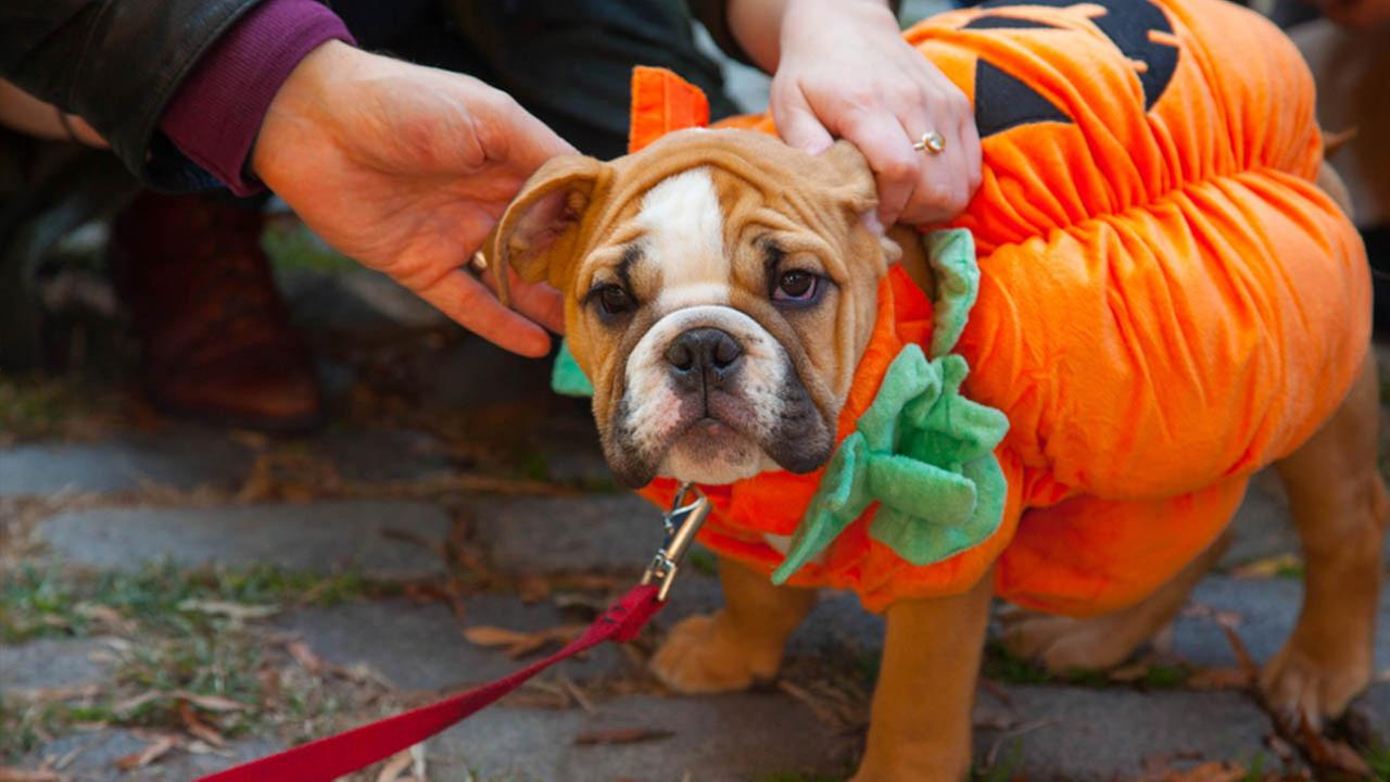 SPCA offers tips for pets during Halloween