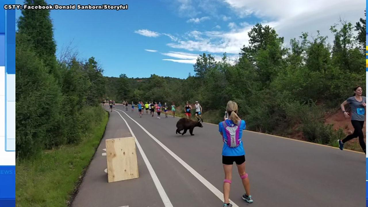 Bear crosses the road during Colorado race.