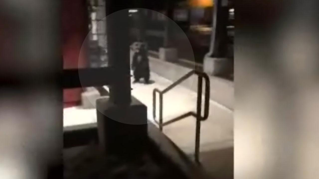 Bears run from police in California