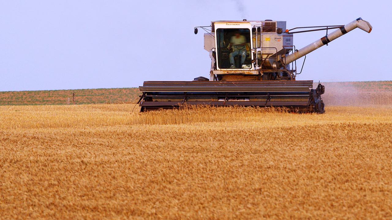 harvester cutting wheat