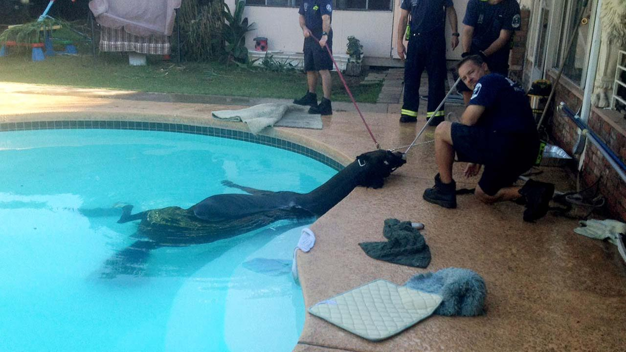 Horse Rescued From Pool At Suburban Phoenix Home Abc13 Com