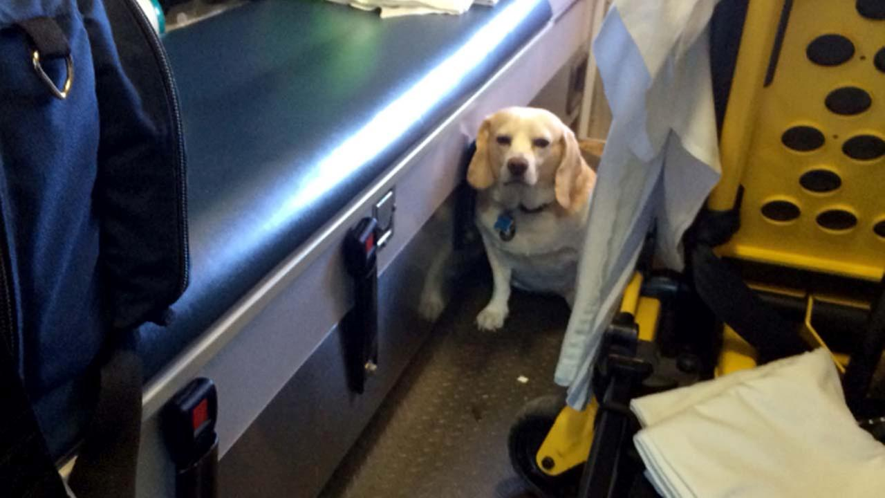 Texas rancher's dog hitches ride on ambulance