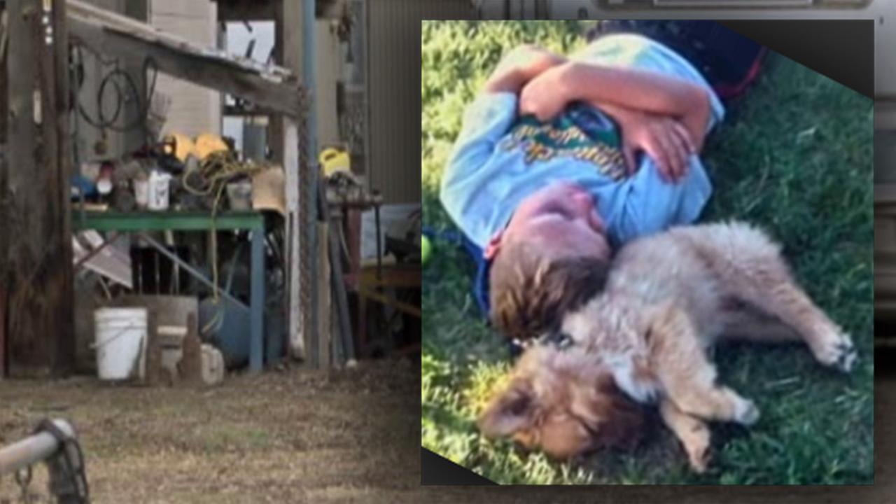 Dog that was shot, killed
