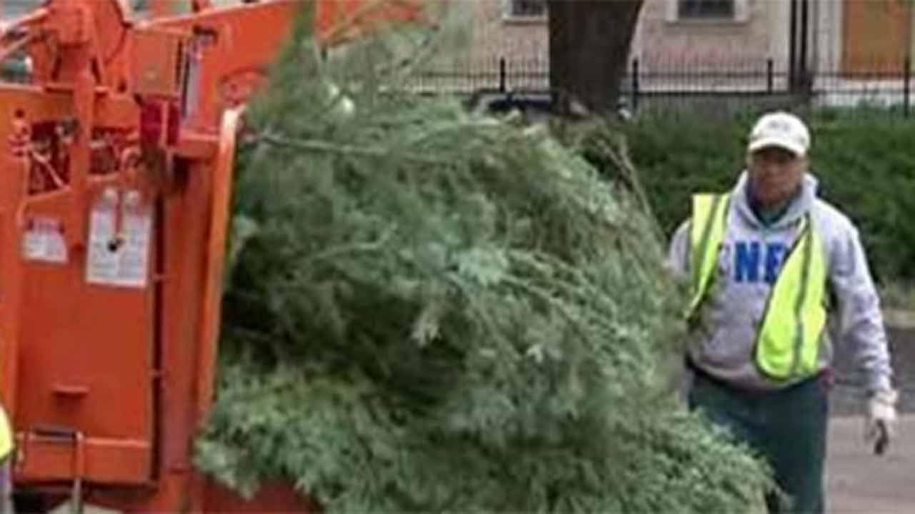 City of Houston begins new year going green with Christmas tree recycling program