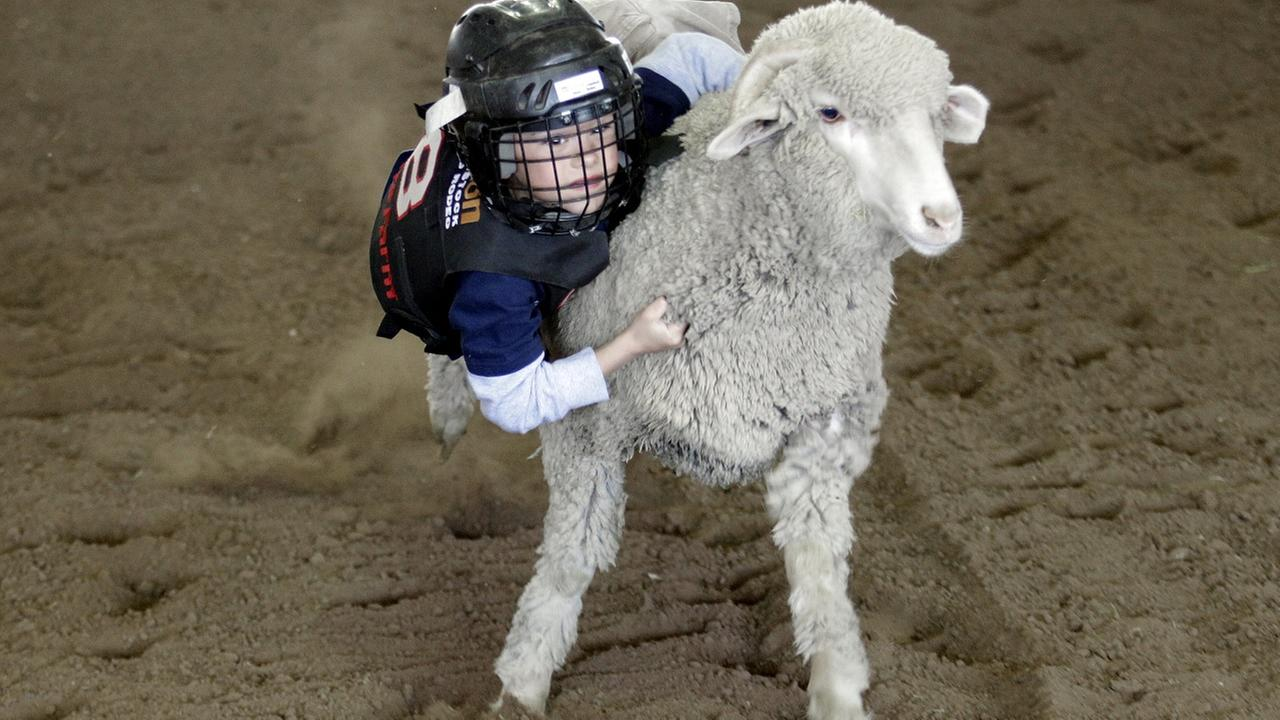 In this photo, Grayden Dewitt, 6, rides a sheep during a Mutton Bustin contest at the Houston Livestock Show and Rodeo.
