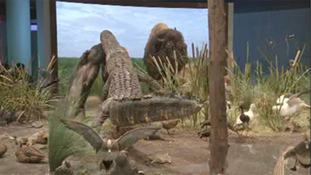 Houston Museum of Natural Science offers new exhibit