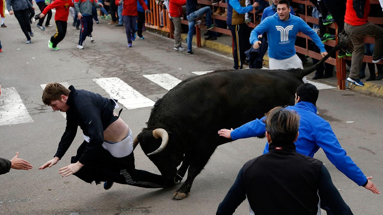 Benjamin Miller gored by a bull