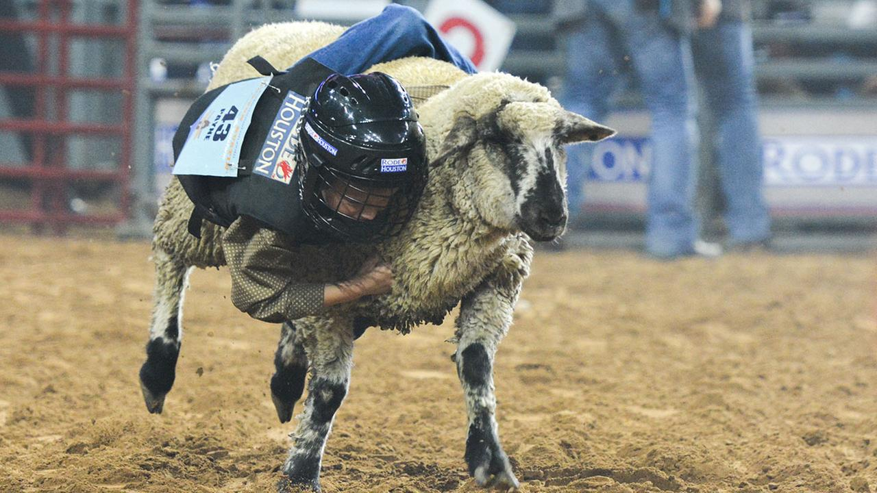 Photos Mutton Bustin Amp Calf Scrambling At The Houston