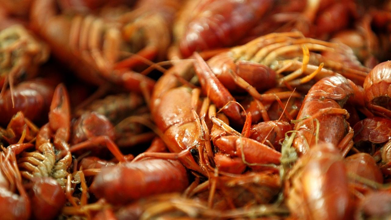 Boiled crawfish lie on display. The harvest is just getting started and peaks into the spring.
