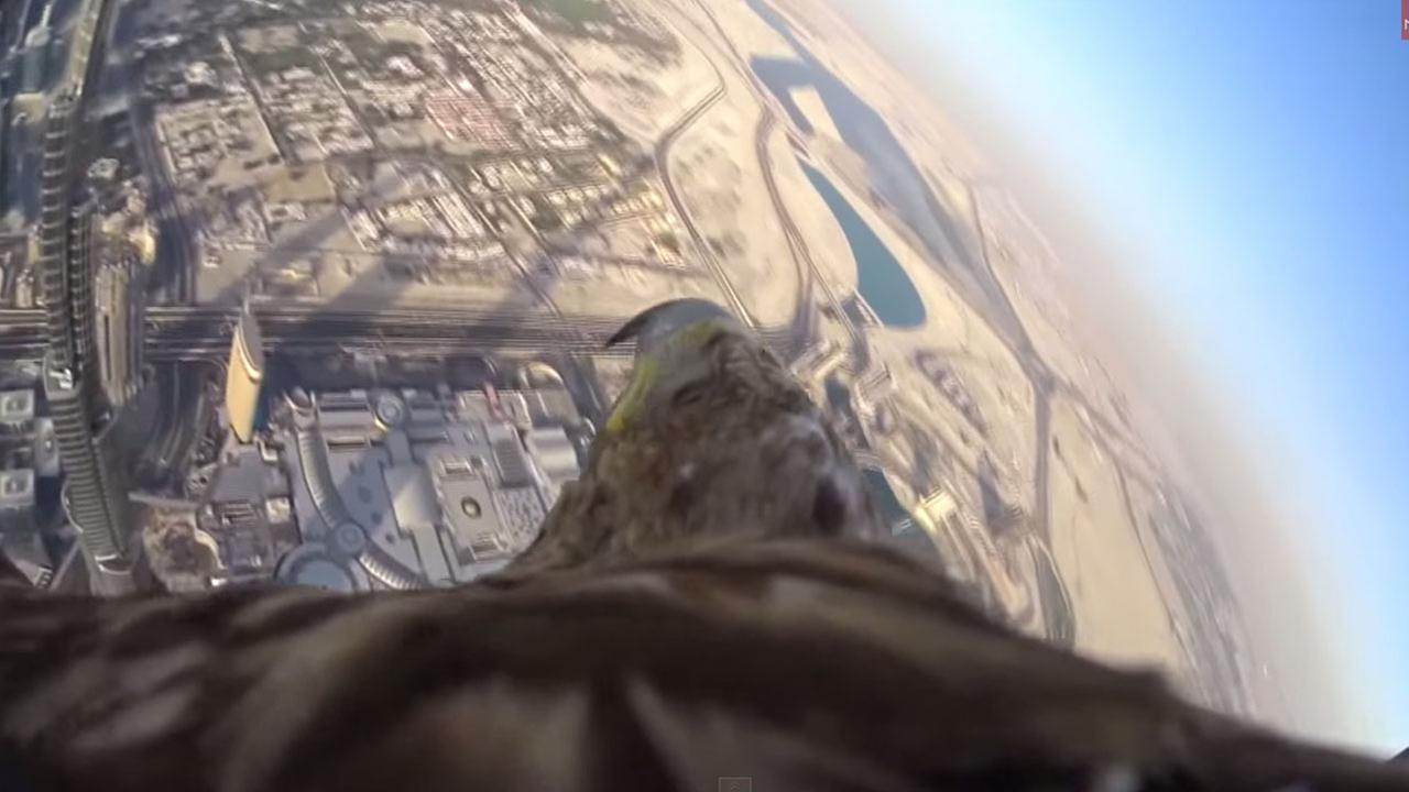 Incredible POV shot as bird descends from worlds tallest building.