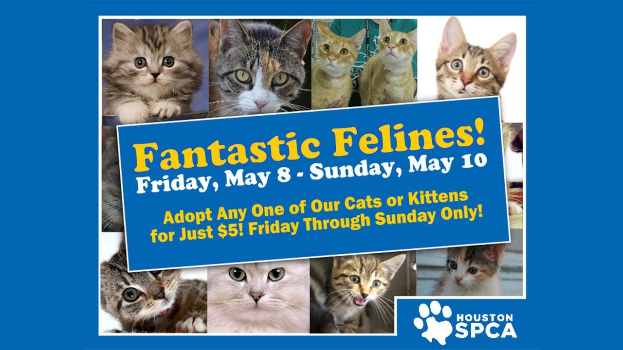 Fantastic felines poster