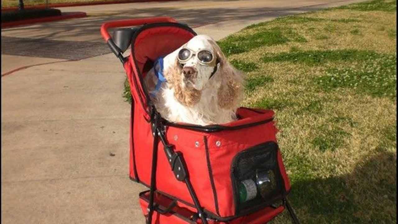 Teddy Bear in his stroller.
