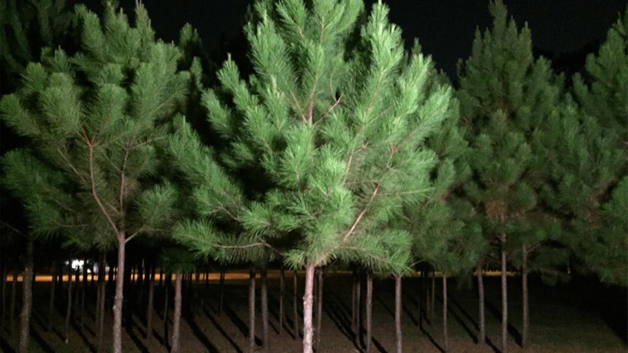 Heat wave, drought poses threat to trees across Houston