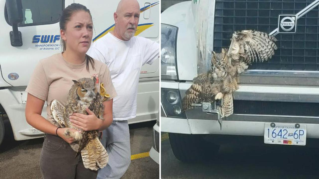 Owl survives wild ride on big rig's grill