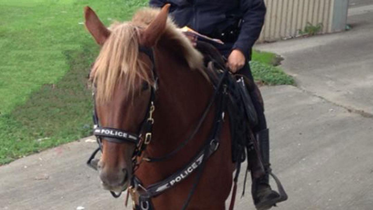 HPD mounted patrol hose Charlotte was put down Friday after an accident with a truck.
