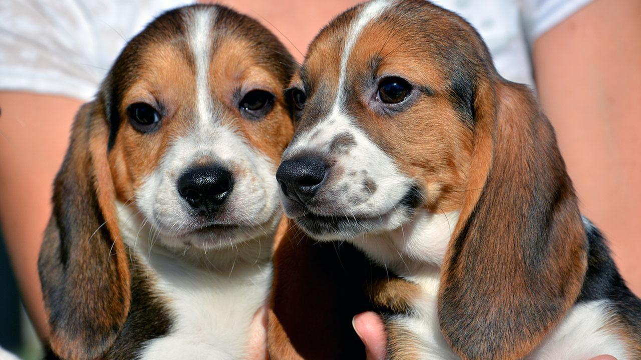Test tube puppies