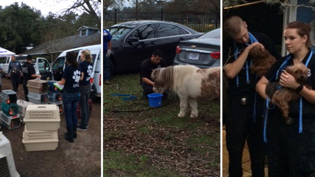 DA's office seizes dozens of animals from Cypress animal sanctuary