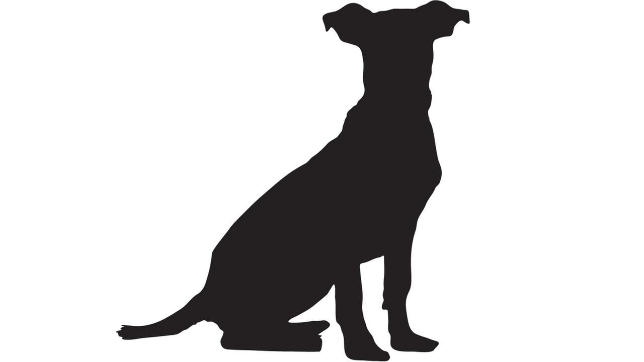 Detective finds decapitated dog, two other dead dogs in Liberty County
