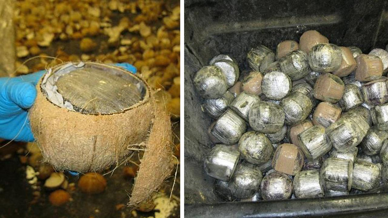 Border agents find pot hidden in coconuts entering Texas