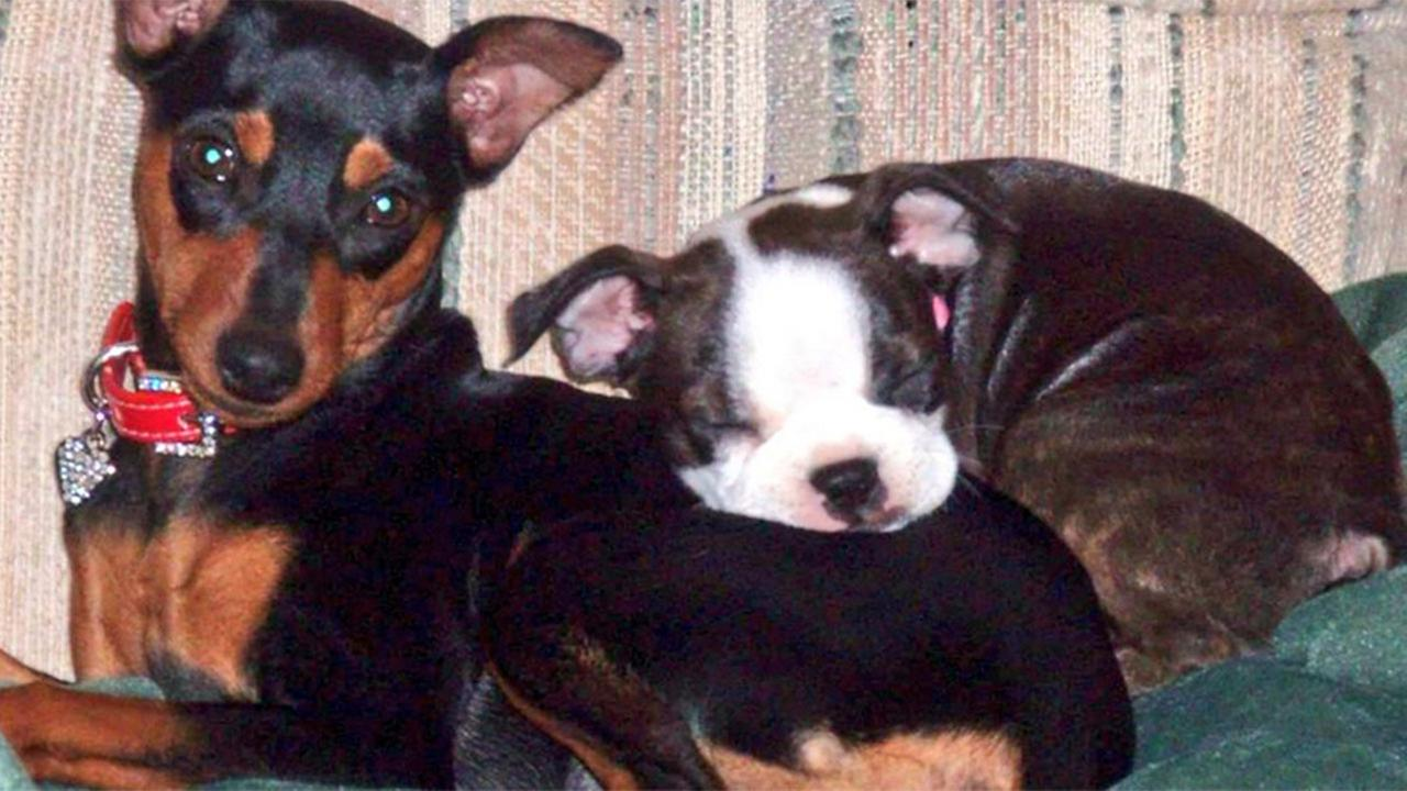 Texas family distraught after their two small dogs shot