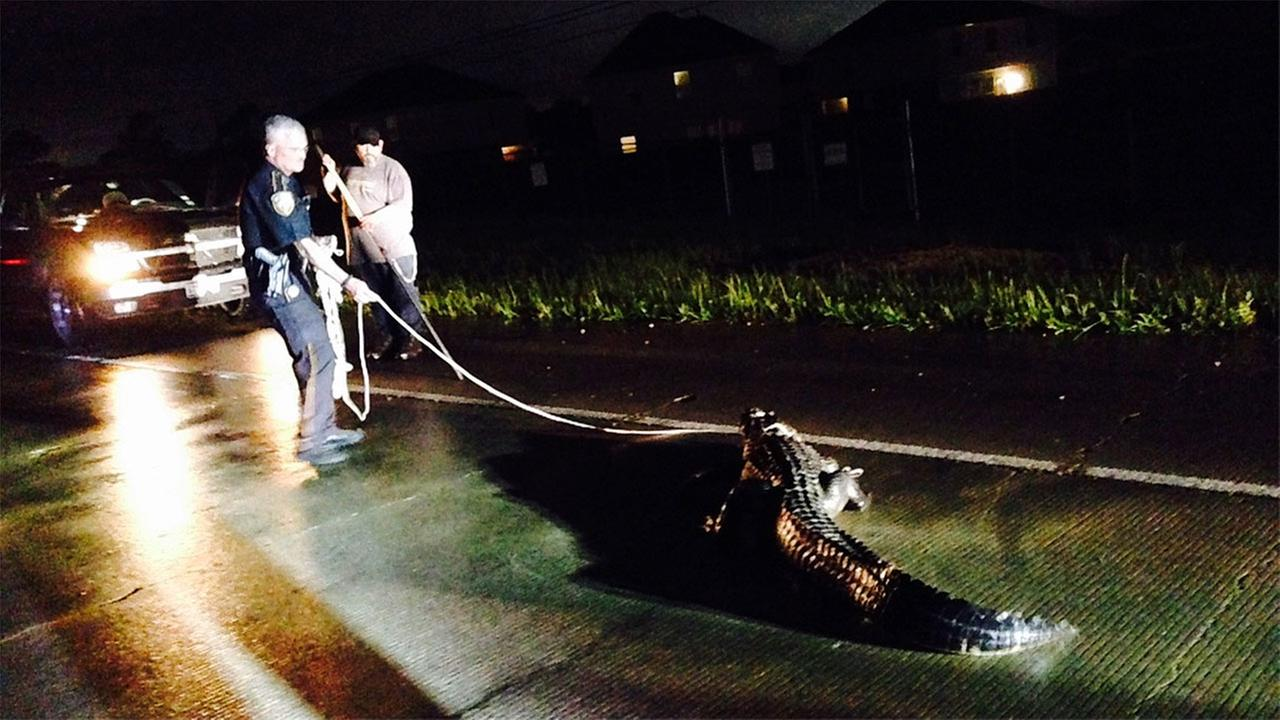 Deputies called upon to rescue alligator and possum