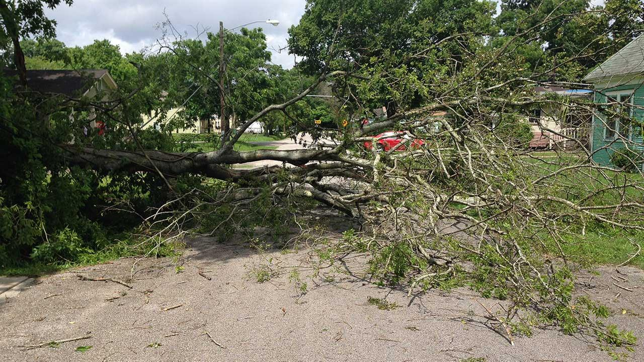 Tree comes down with power lines in N. Houston neighborhood