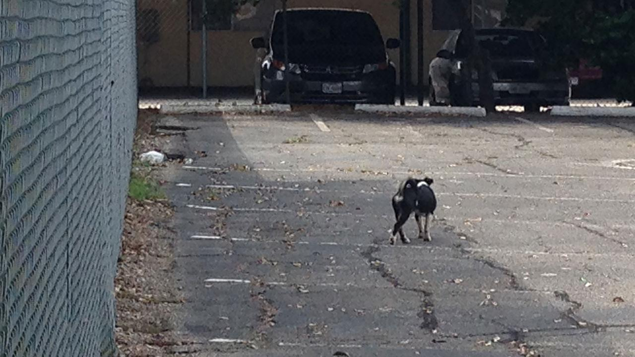 Stray dogs sparking concern Bellaire neighborhood