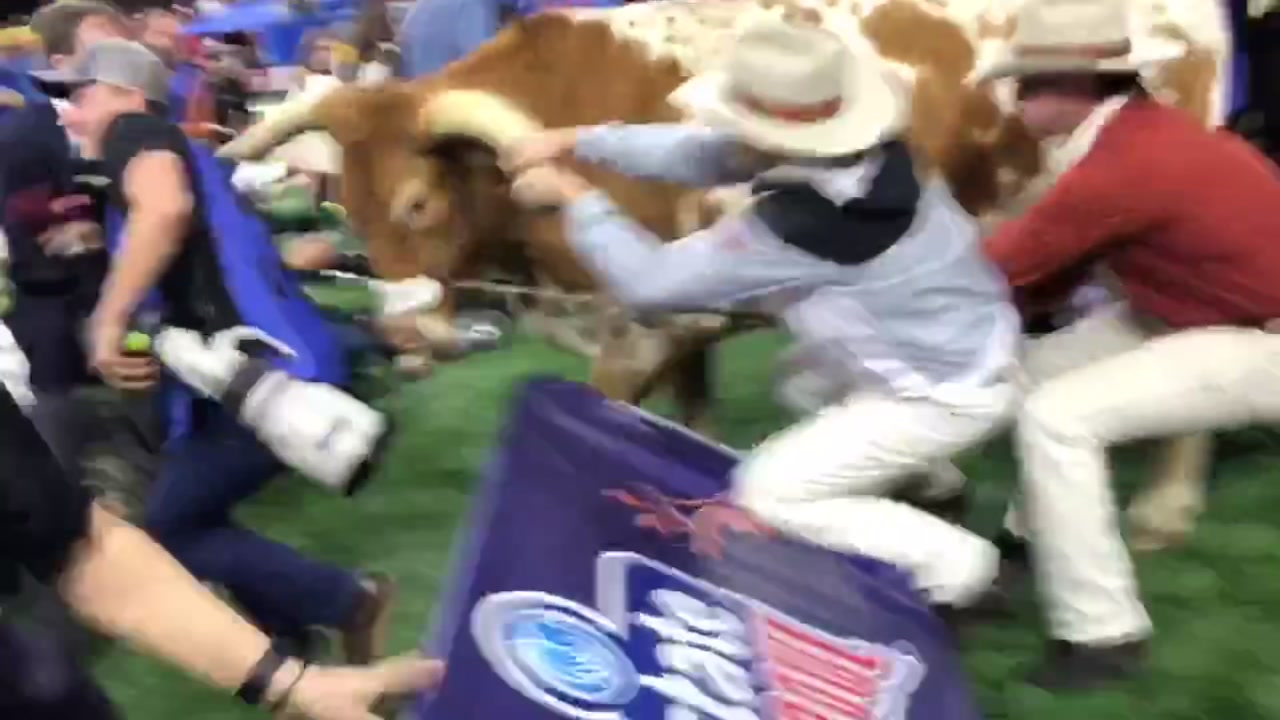 The Texas Longhorns mascot Bevo added some pre-game fireworks after nearly attacking Georgias mascot Uga.