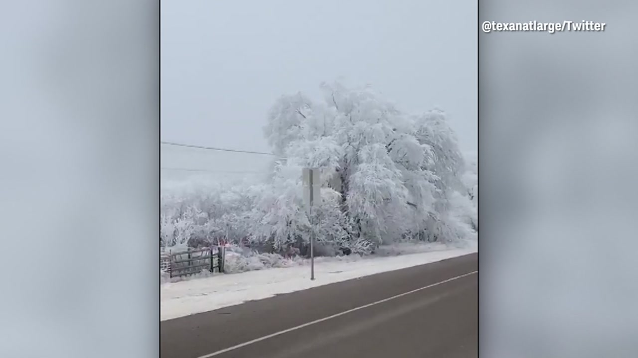 Video shows trees covered in frozen fog