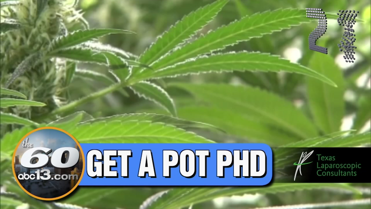 Medical marijuana courses are coming to Houston, where students will learn about the history of the drug.