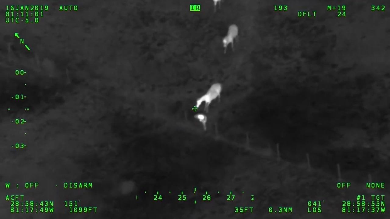 A Florida suspect almost fled authorities, until he was caught with the help of horses