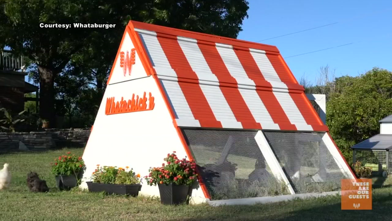 Fort Worth couple build Whataburger chicken coop.