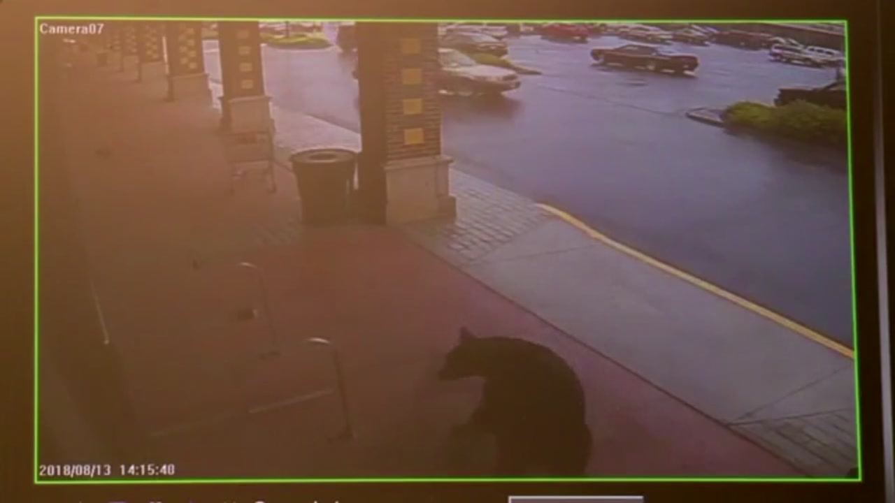 Bear walks into a liquor store