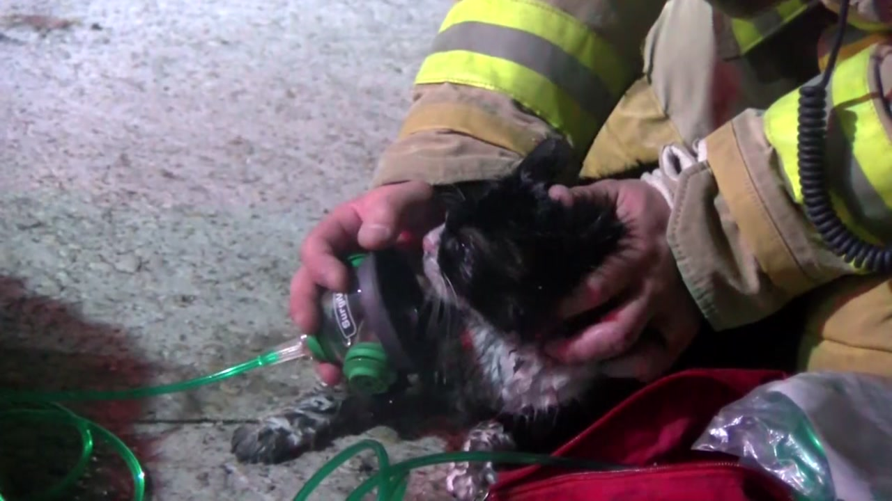 Firefighters rescue cat, dog from burning home in NW Houston
