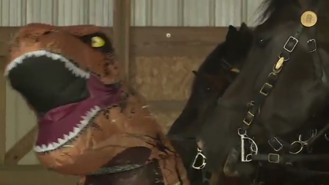 How T-Rex costumes and other inflatables are preparing police horses for the unexpected