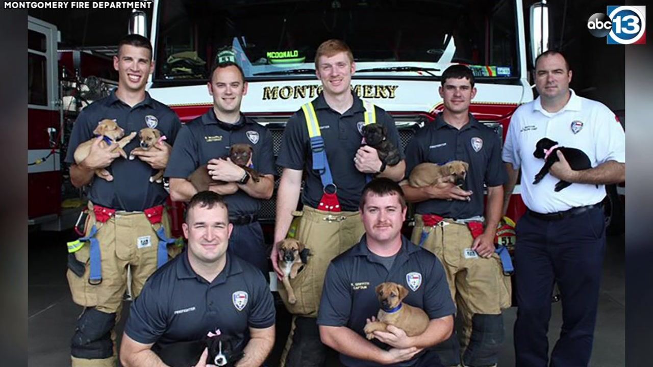 Firefighters want you to adopt these rescued puppies