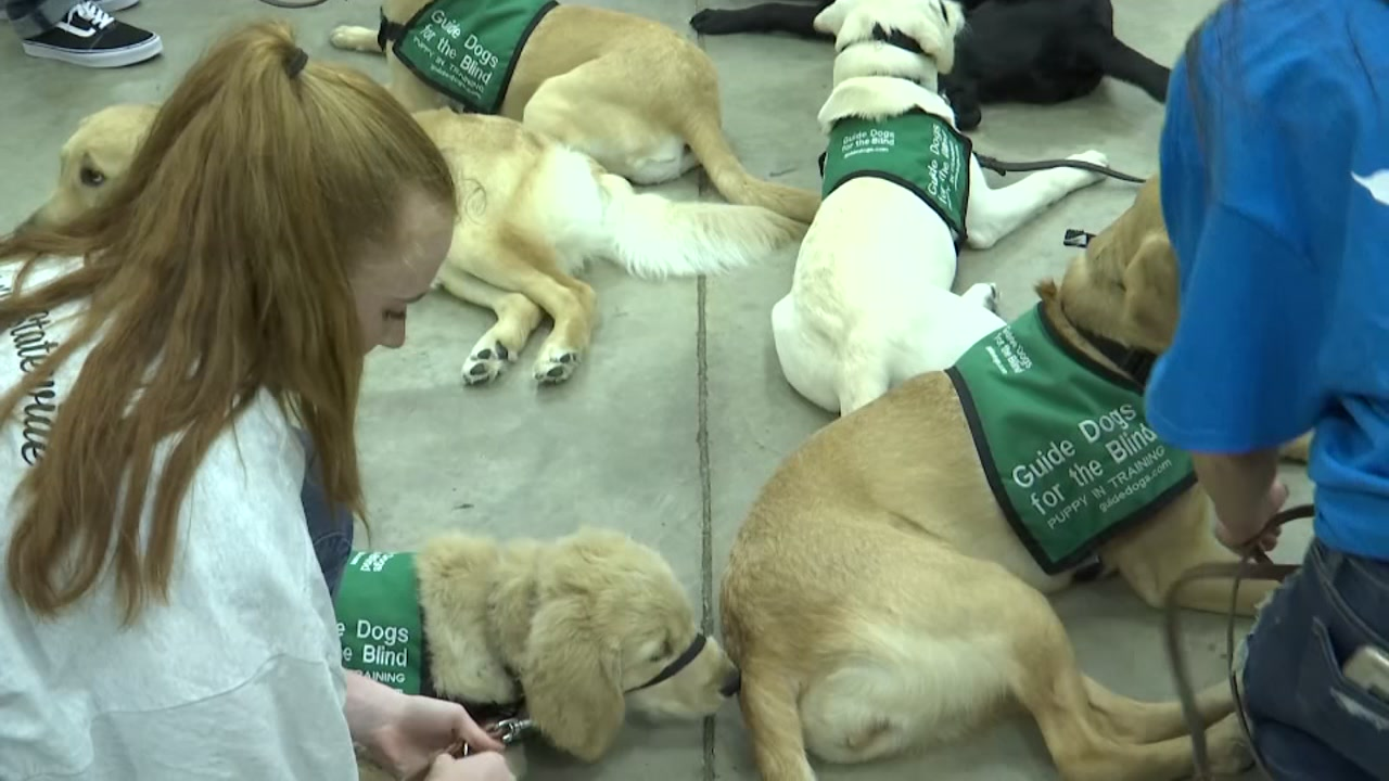 Dobie HS students train puppies to be guide-dogs for the visually impaired