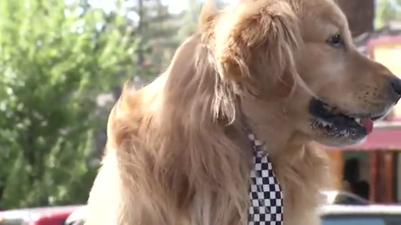 How did a furry friend become mayor of Idyllwild?