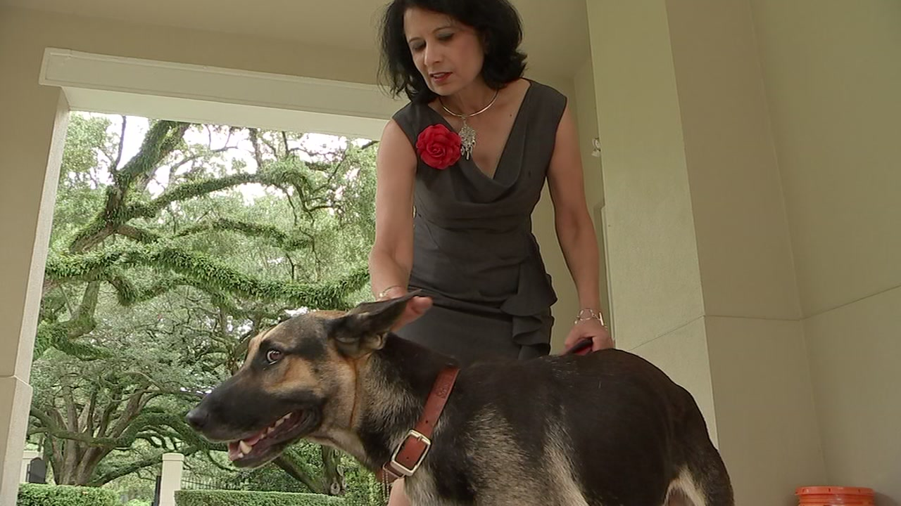 Stray dog captures heart of University of Houston president