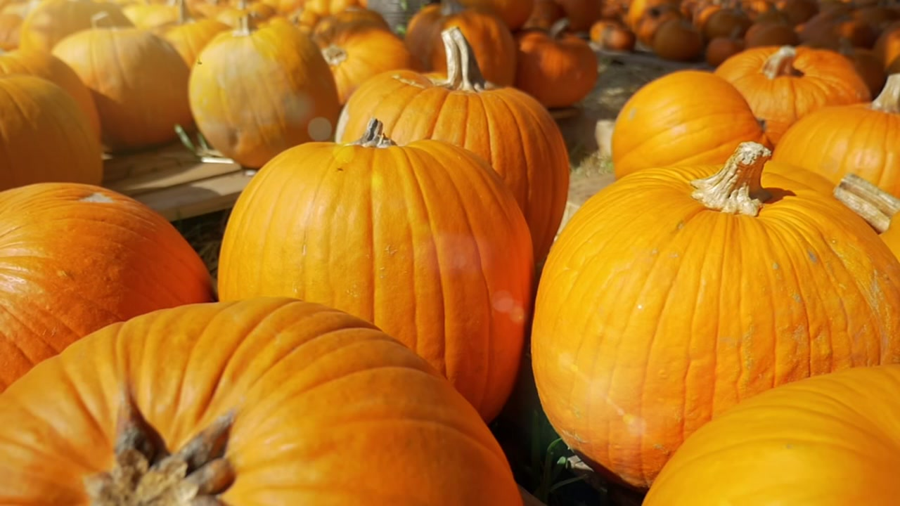 Get in the spirit with these free fall festivals