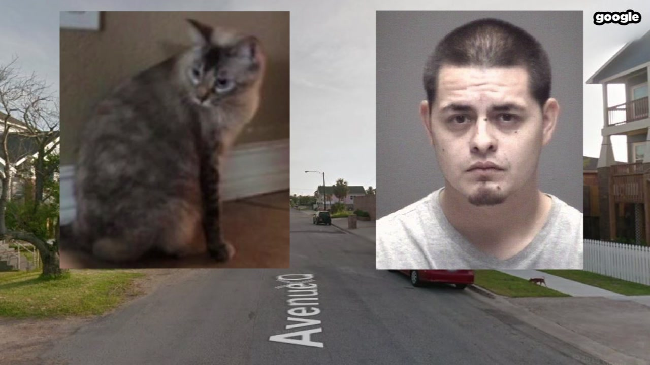 Galveston man charged with stabbing cat to death
