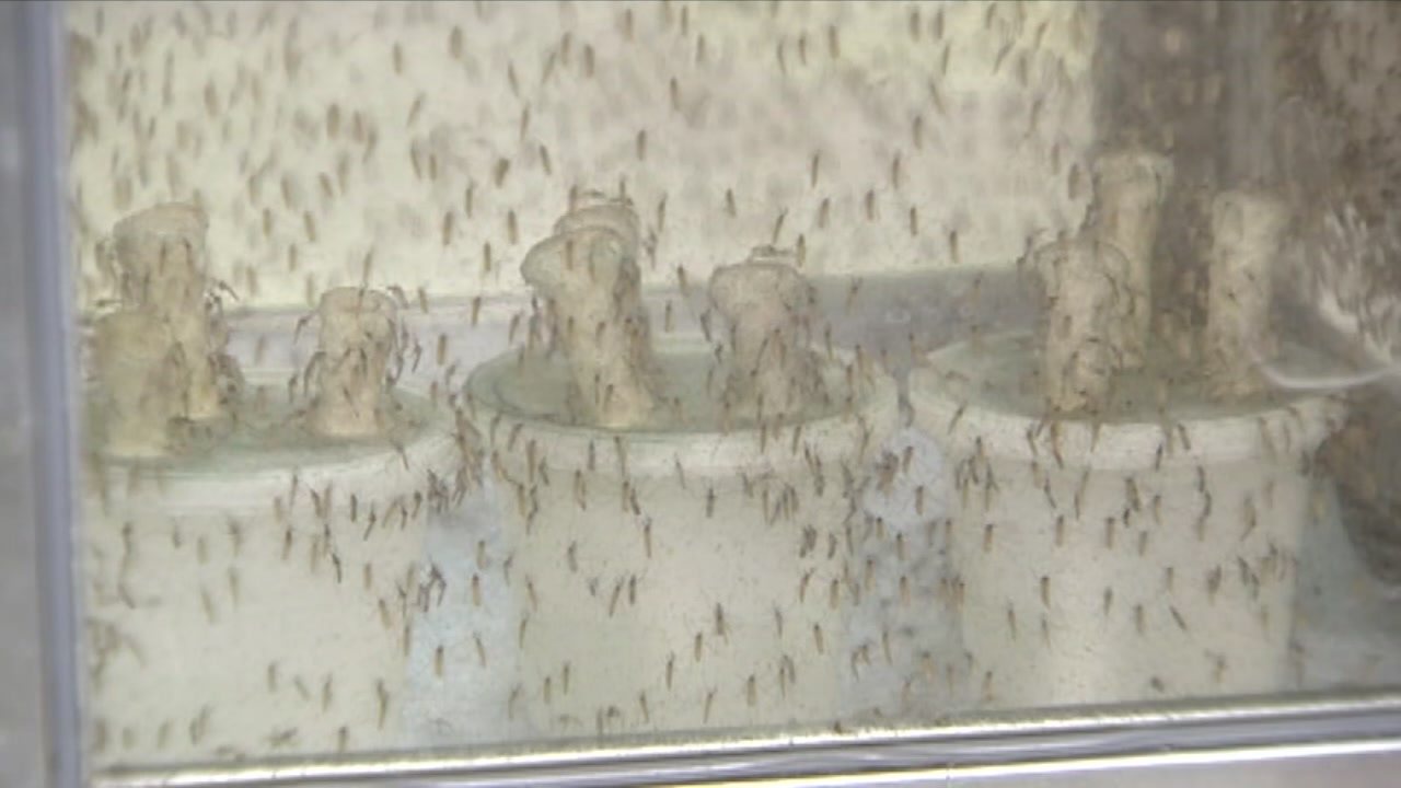 Harris County reports first West Nile death of the year