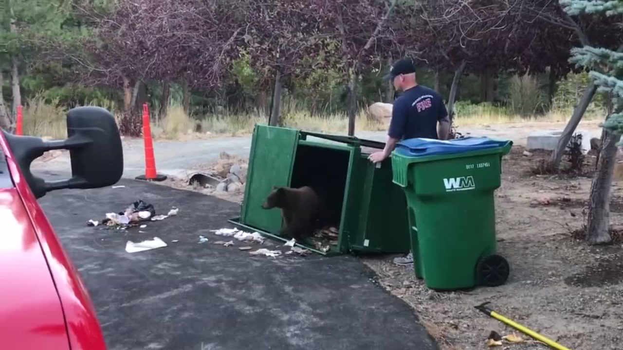 Firefighters rescue 3 little bears trapped in trash container