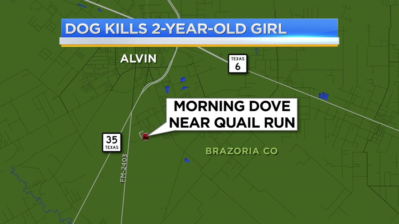 2-year-old mauled to death by family dog in Alvin