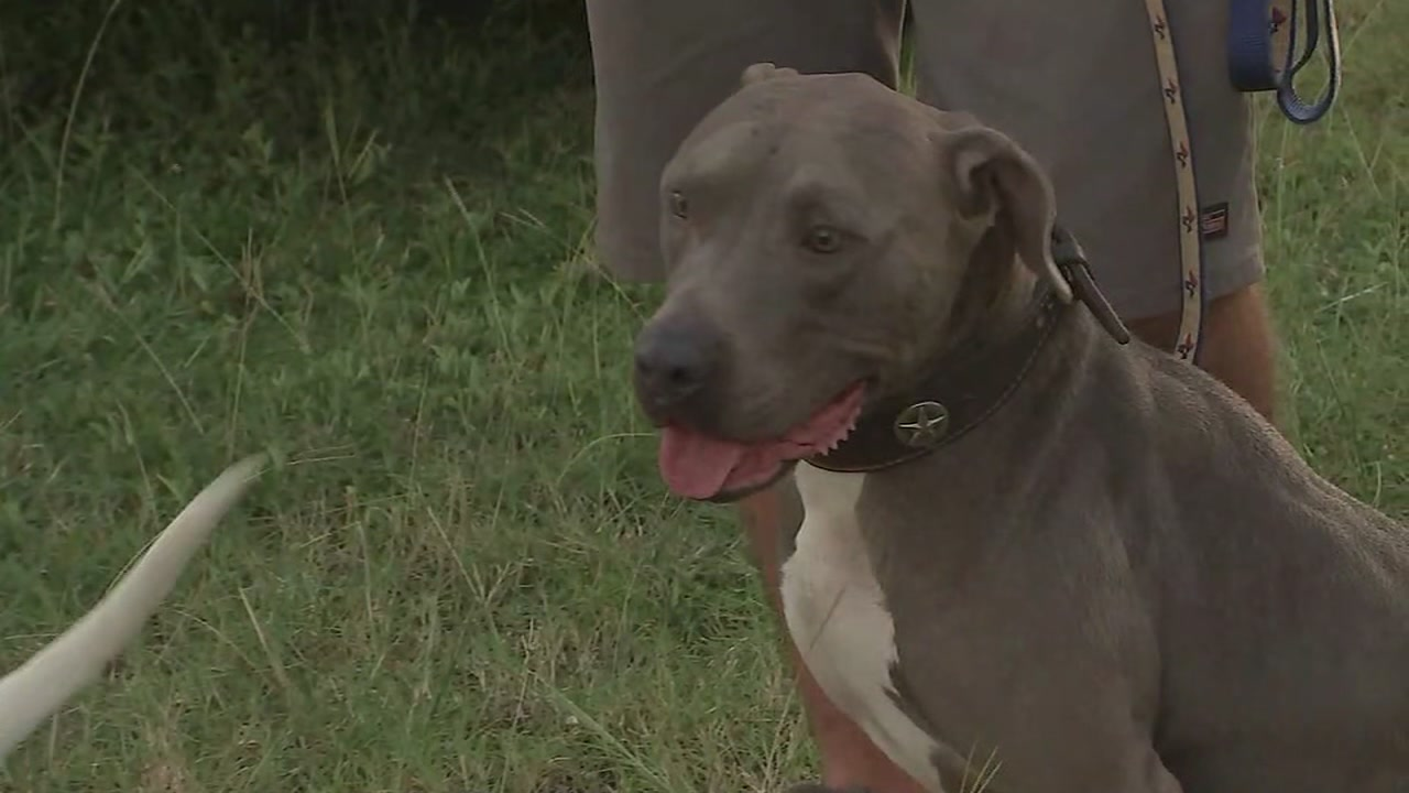 2-year-old mauled to death by familys dog in Alvin