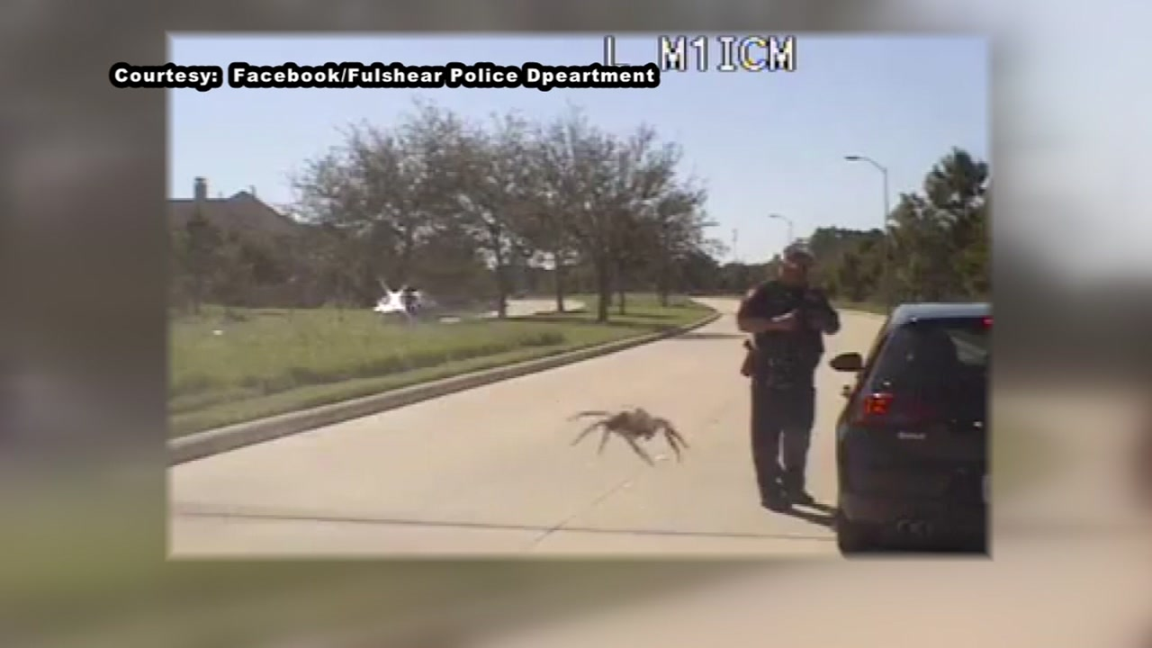 A perfectly-placed spider on a windshield gave Fulshear police an early Halloween scare.