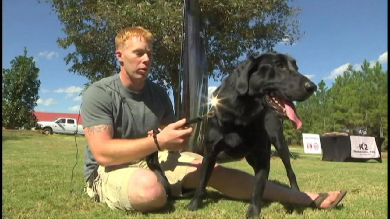 Marines reunite with dogs