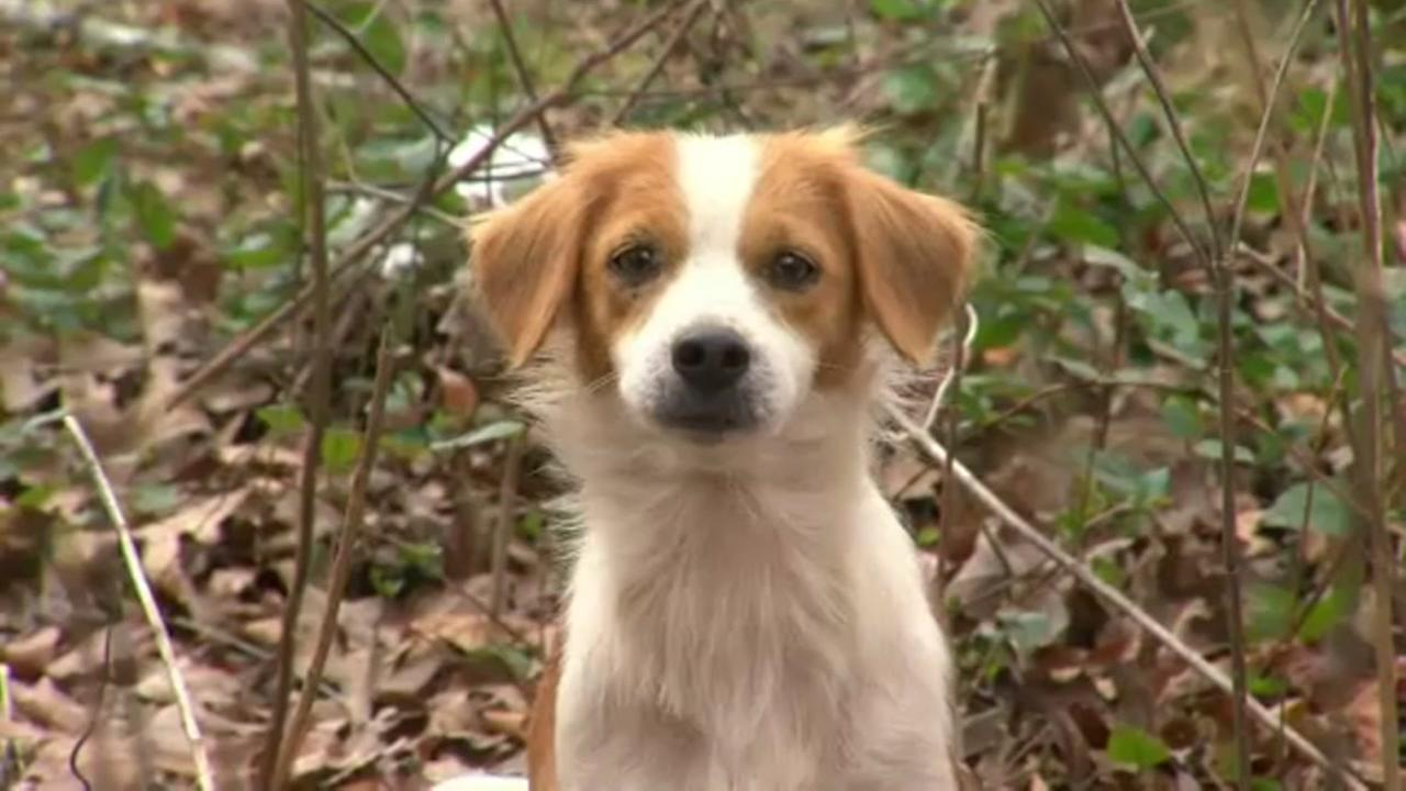 Authorities fatally shoot dozens of dogs after owner is found partially eaten