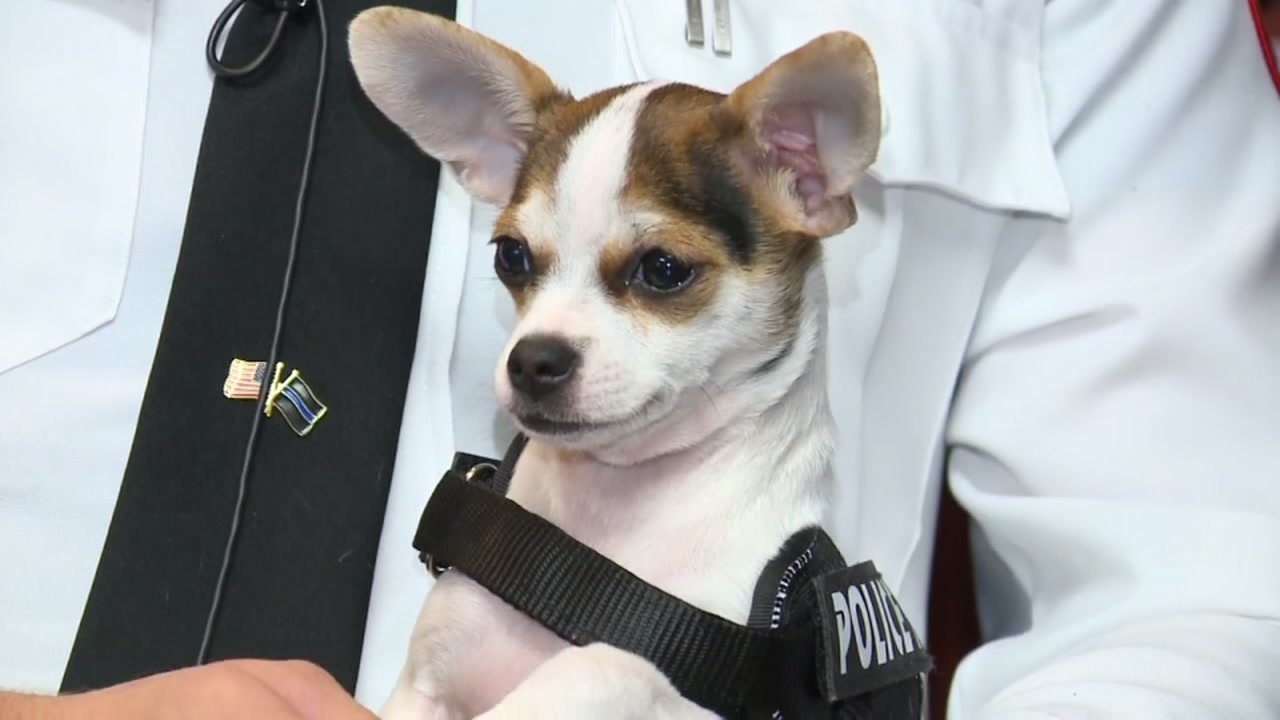 This police department has a new pup on duty.